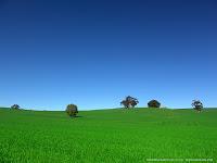 Paisagem de campo cultivado onde o verde contrasta com o azul celeste.