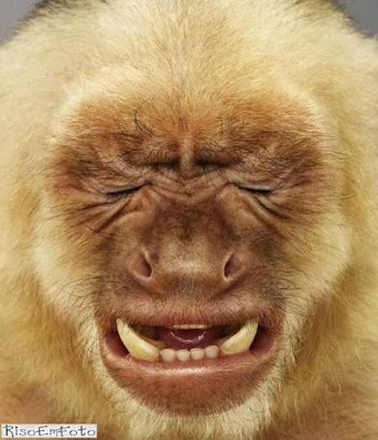 Macaco faz cara de quem acabou de levar um baita chute no saco.