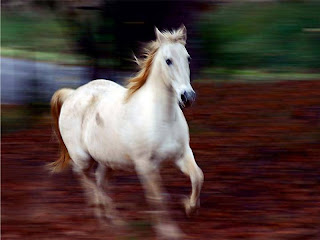 cavalo puro sangue
