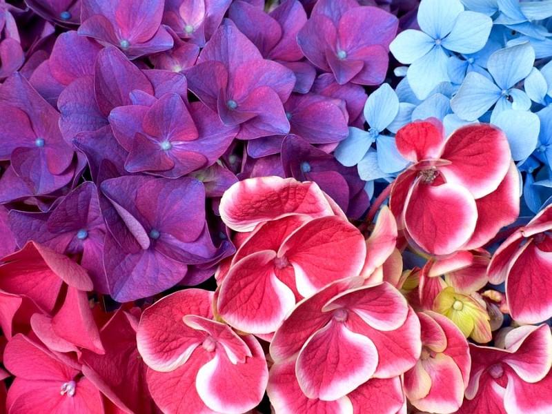 in) Foto: Flores Bonitas: Qual a Flor mais bela do Mundo?: falandofotos.blogspot.com/2010/11/flores-bonitas-qual-flor-mais...