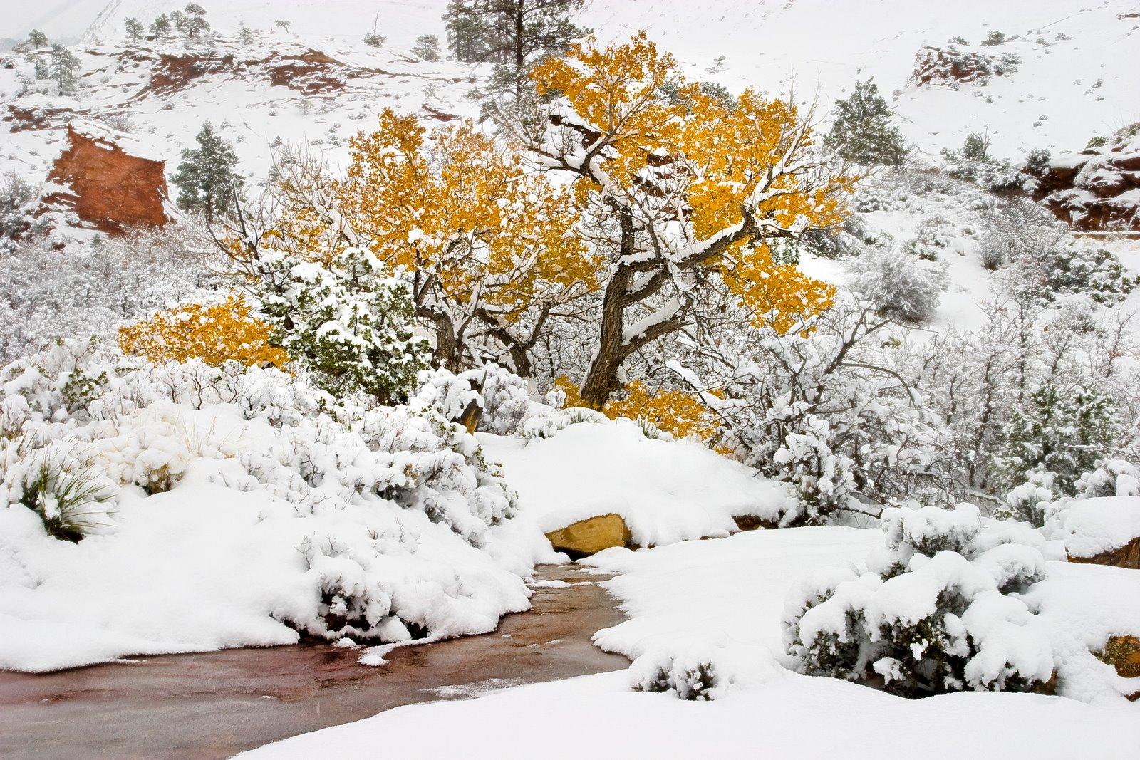 Image result for november snow