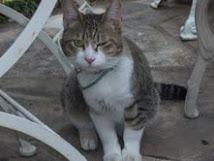 猫の飼い主を探しています!
