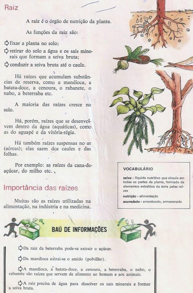 CI  NCIAS   PARTES DA PLANTA