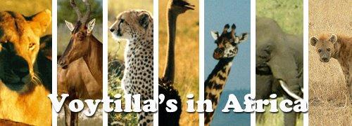 Voytilla's in Africa