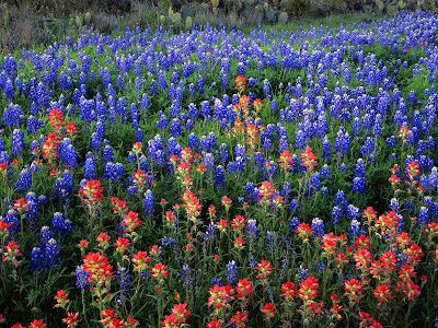 fields of the nephilim wallpaper. field of flowers wallpaper