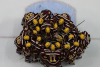 Gopher Hockey roster on the ice