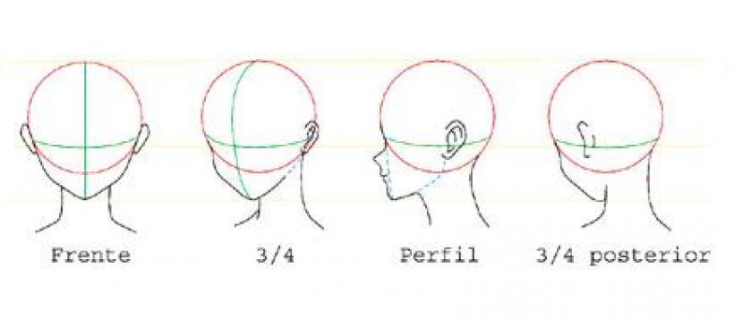esquema de la cabeza: