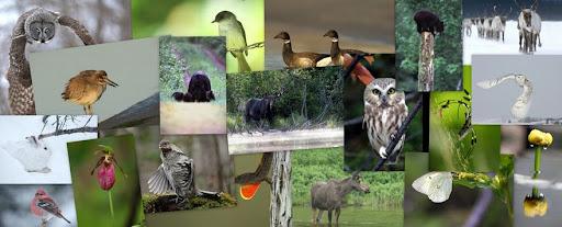 Photographie de la faune et Voyages
