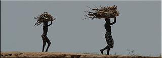 Dogons, corvée de bois