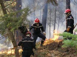 pompiers en forêt