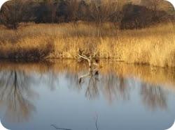 Reserva Natural de Sebes