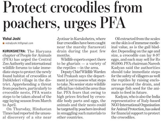 Crocodiles needs attention - Naresh Kadyan