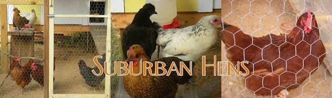 Suburban Hens