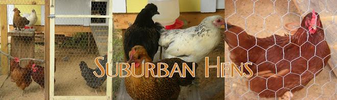 Suburban Hens