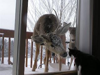 deer cat