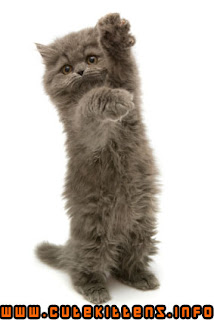 a kitten waving goodbye