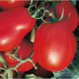 san marzano tomatensauce