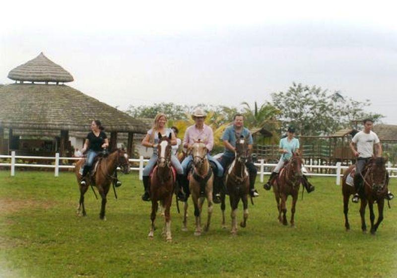 venta caballo ecuador: