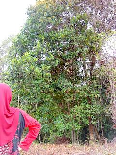 gambar hutan keluarga yang damai