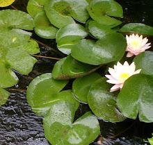 Oak + Lotus