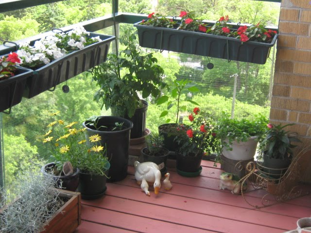 Aging in slow motion balcony gardening for Balcony garden