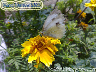 butterfly picture taken by mobile,mobile pictures,beautiful butterfly,new year card,happy Nepali new year,happy new year,new year 2066,greeting card for new year,butterfly in new year,about bikram sambat,Nepalese new year .