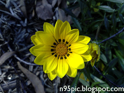 purple flowers,yellow flowers,daisy,blooming flowers,flower cards,flower blossom,buy flowers,Gift flowers,send gift