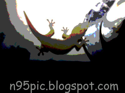 photoshop effect,photoshop,photography effect,lizard,animals