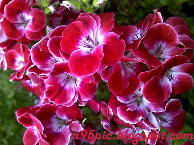 Fragnance of Flower , Flower, Send flower, Buy Flower