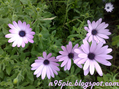 My n95 pictures, Gift flowers,Buy flowers,Send flower, n95 pictures,n95,buy n97