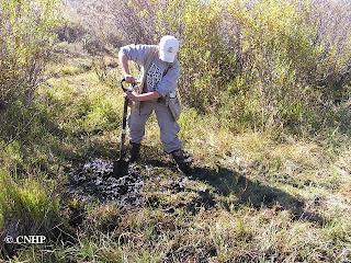 Wetland soil pit
