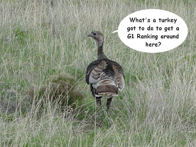 Wild turkey with word balloon: What's a turkey go to do to get a G1 Ranking around here?