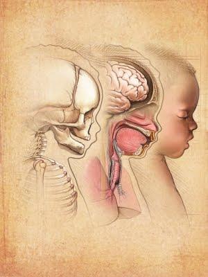 características mas comunes de los niños con síndrome de Asperger