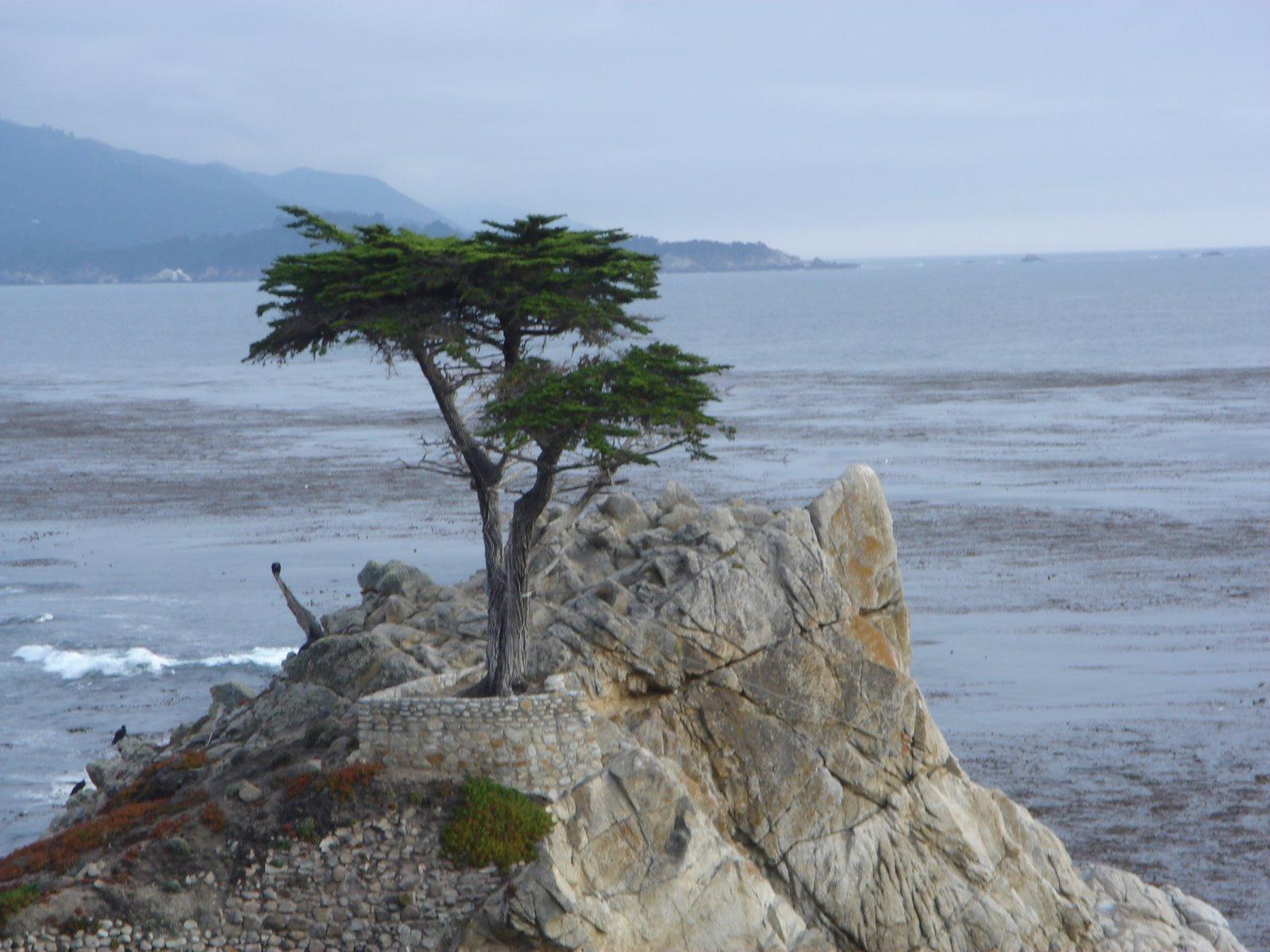 [Monterey+]