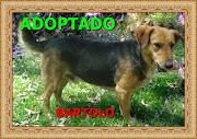 BARTOLO ADOPTADO!!!