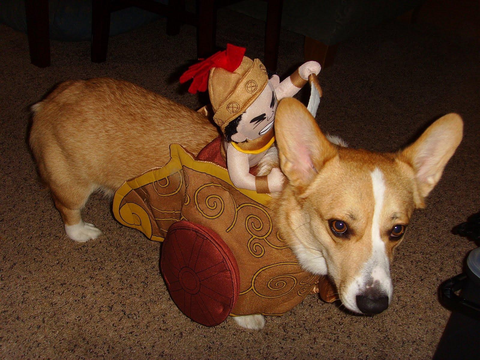 bender s adventure dog blog october 2010