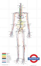 Human Subway