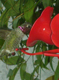 Had your hummingbird fix yet?