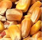 Per conoscere le quotazioni dei prodotti agricoli - link Camera di Commercio Verona