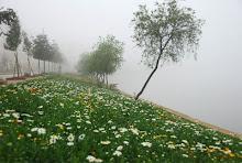 Sapa trong sương mù (Ảnh Trần Việt Dũng)
