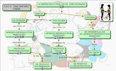 http://www.juntadeandalucia.es/averroes/ceip_san_rafael/REPRODUCCION/REPRODUCCION.html