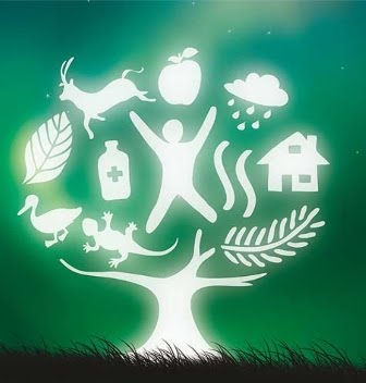 2011: Año Internacional de los bosques