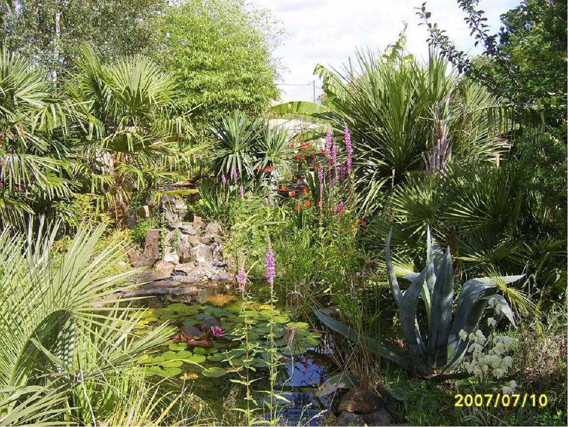 Alex art du jardin et du bonsa d cembre 2010 for Entretien jardin decembre