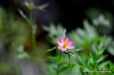 Bunga Ulam Raja