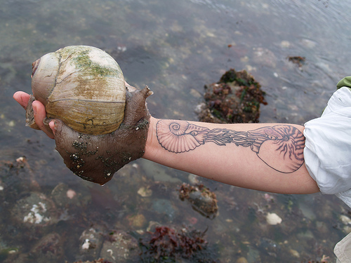 shell tattoo. more and more and more.