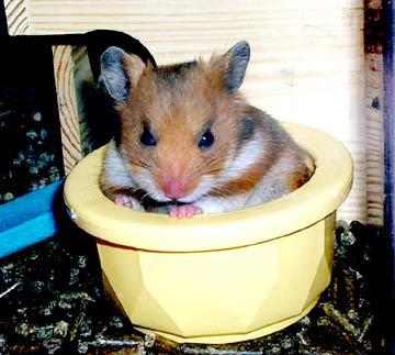 Hamsters Hams_07