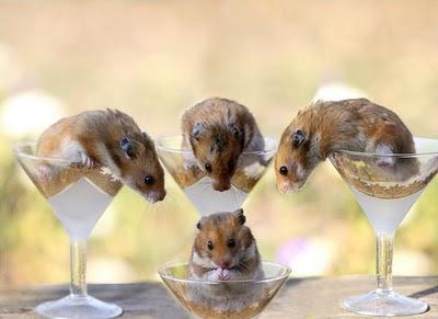 Hamsters Hams_13