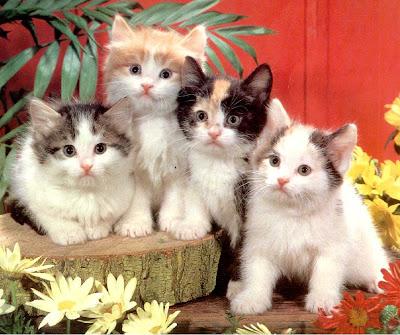 Consejos para propietarios de gatos GATITOSconsejos