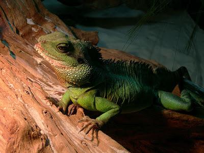 Reptiles – Introducción Irep_05