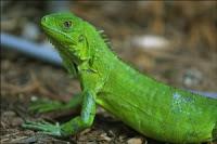 Reptiles como mascotas Mrep_01